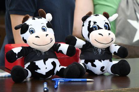 Kühe als Preis beim Glücksrad